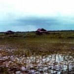 New Rice Field